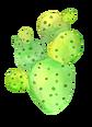 cactus1.png