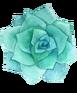 succulent17